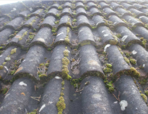 Build up of moss on roof tiles