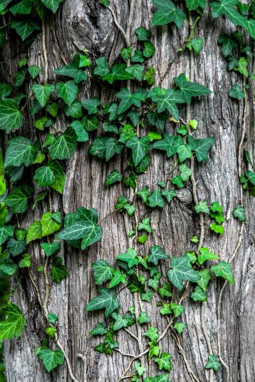 ivy types