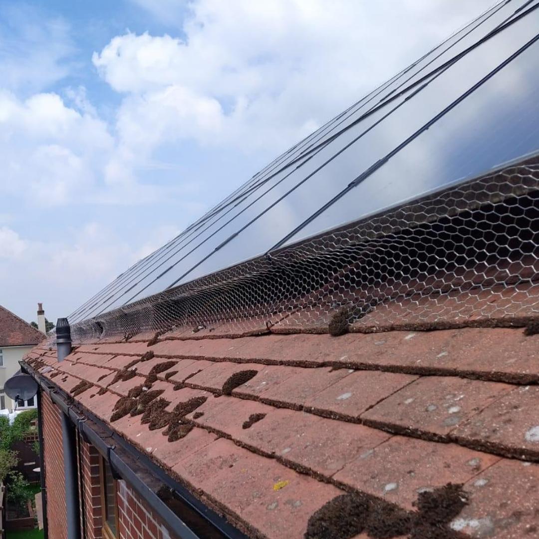 Bird Meshing Solar Panels